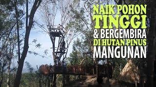 Naik Pohon Tinggi & Bergembira di Hutan Pinus Mangunan Yogyakarta