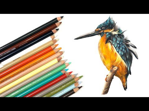 DRAW A BIRD With Colored Pencils - Kingfisher