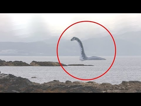 Download 5 SEA SERPENT CAUGHT ON CAMERA