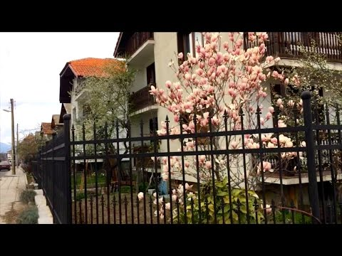 Банско в цвету: прогулка по городу и лесу