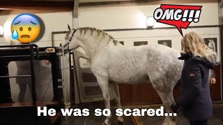 trying-to-get-my-huge-stallion-in-the-aquatrainer