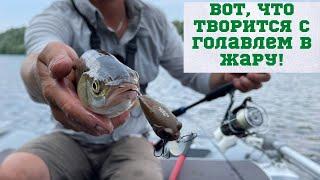 Что ловить в летнюю жару Голавли на воблеры жарким летом Рыбалка сплавом по Десне