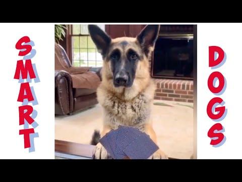 Dog plays games during lockdown
