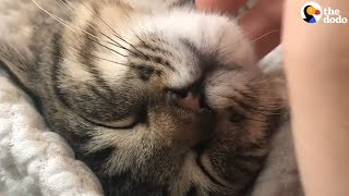 Cat Purring Has To Be The Most Relaxing Sound Ever | The Dodo