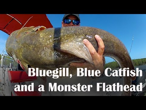 how to catch flathead fish