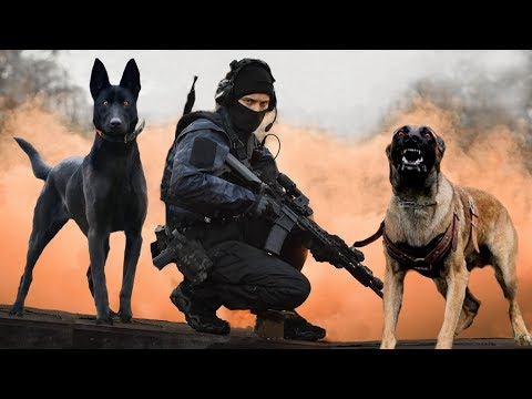 These Are 10 Ultimate Military And Police Dog Breeds