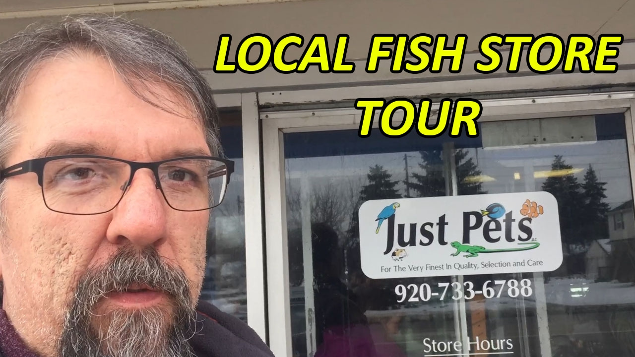 Local fish store tour just pets appleton wisconsin youtube for Local fish stores