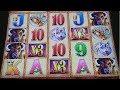 Huge Jackpot Handpay!!! Buffalo Gold Slot Machine