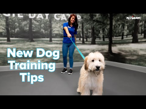 How to Train a New Puppy or Adult Dog: Tips & Tricks | PetSmart