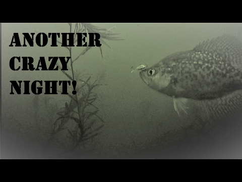 Hot On The Crappie, Super Fun!