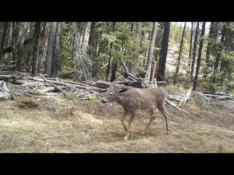 A Year in the Life of a Trail Camera