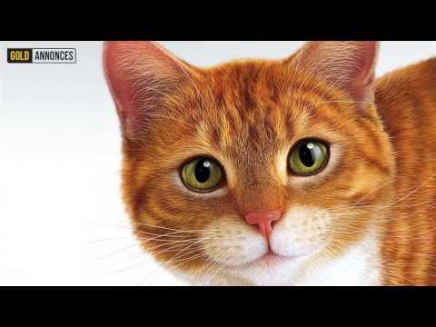Annonce chat Zurich Suisse - GoldAnnonces #animaux