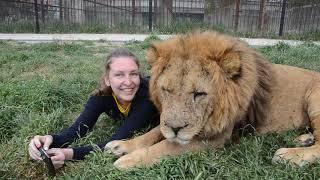 Массаж для львицы ЧОЛИ !!!