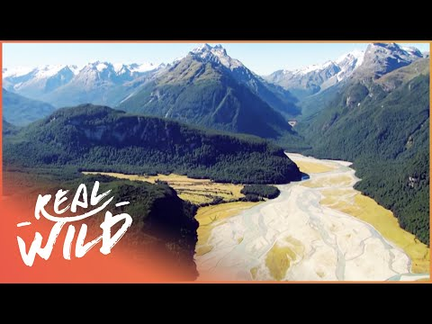 Wild River Journeys: Rengitata [New Zealand Nature Documentary] | Wild Things