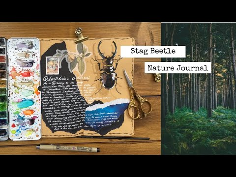 Stag Beetle Nature Journal 🐞🌱