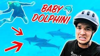 Swam Into Wild Baby Dolphins! **SOO MANY**