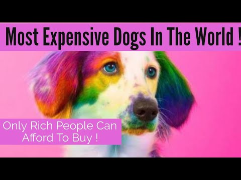 Top 5 Most Expensive Dogs In The World
