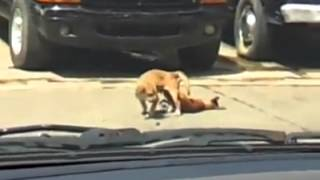 dog dies while having sex in the streets of puerto rico caught on tape