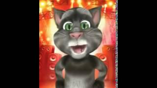 Lindo gatinho faz declaração de amor para você