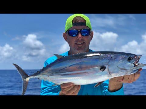 Skipjack Tuna Catch ,clean & Cook