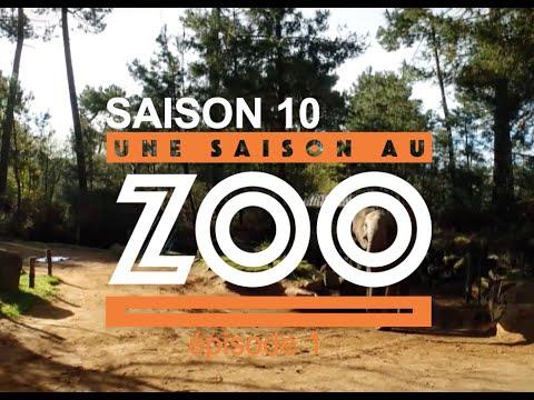 Download Une Saison au Zoo S10 - Ep 01