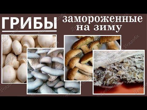 как заготовлять грибы вешенки