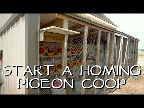 How To Start Your Own Homing Pigeon Coop - YouTube