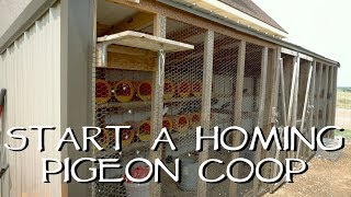 How To Start Your Own Homing Pigeon Coop