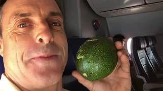 Mile High Avocado Club