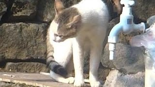 angry tom cat meowing very loudly at another cat asking him to get out of his territory