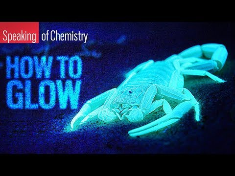 How Do Some Animals Glow? — Speaking Of Chemistry