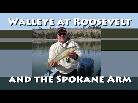 Walleye on Roosevelt and the Spokane Arm