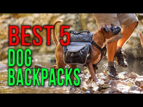 BEST 5: Dog Backpacks 2018