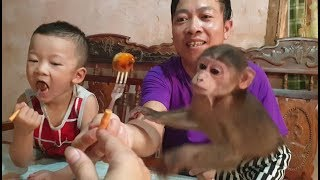 Baby Monkey | Daddy Makes Junk Food For Monkey Doo And Cute Babies