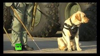 Российские саперы провели тренировку перед отправкой в Пальмиру