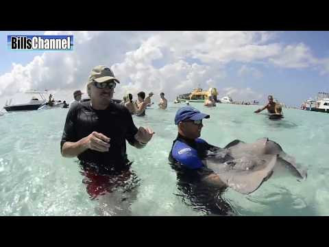 COOL STINGRAYS