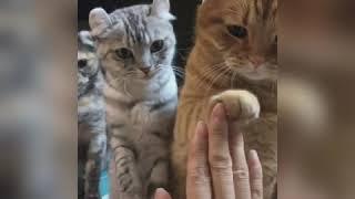 Tiktok Động Vật💖 ngáo ngơ và tom tấu cực hài p1 ::)hội những người yêu chó và mèo