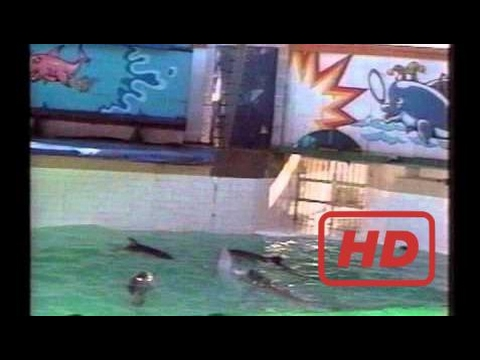Whale Documentary Lolita The Killer Whale: Slave to Entertainment - full movie