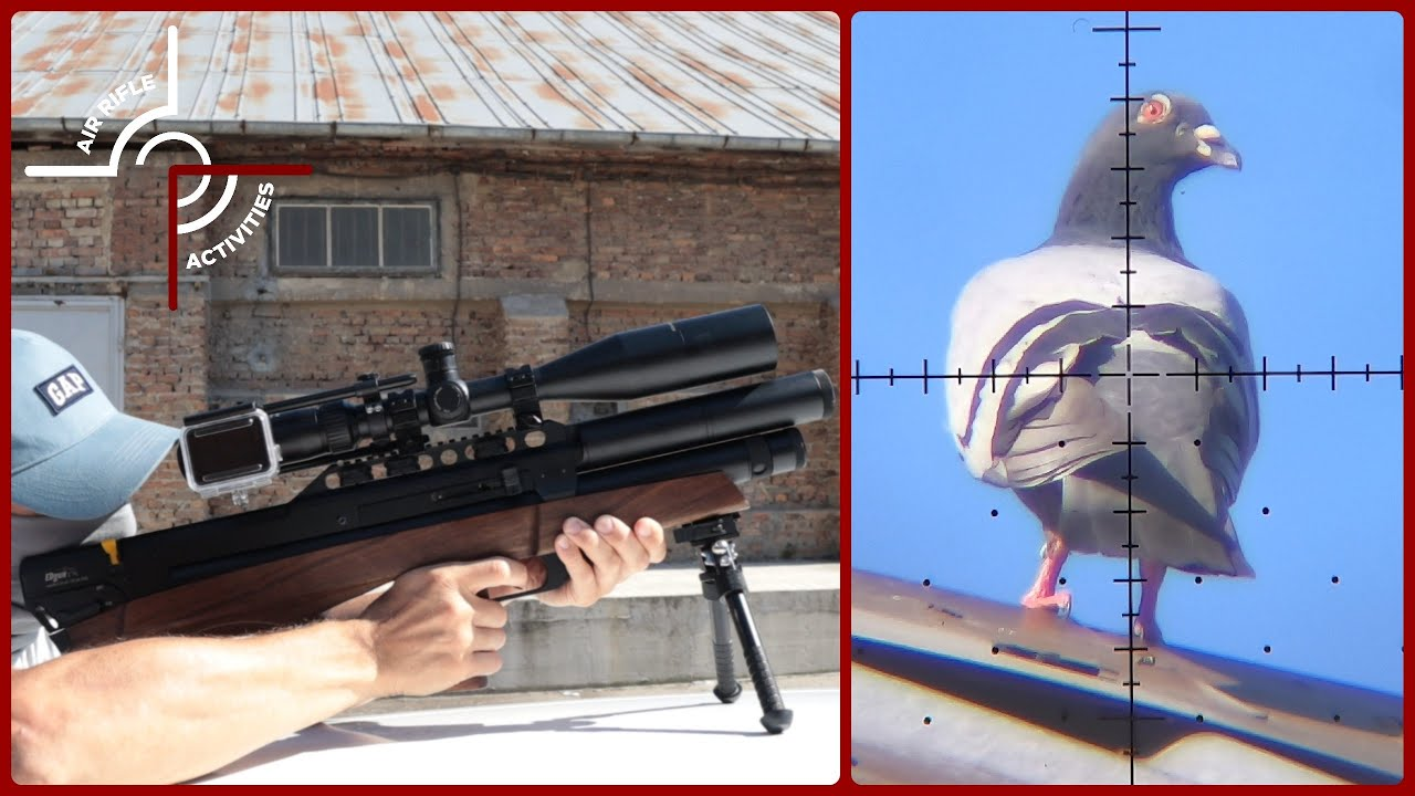 Hot and Windy Summer - The Airgun Pest Control Continues