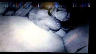 спасение кота застрявшего в шахте приточно-вытяжной вентиляции 10-и этажного дома на 5-м этаже!(Было интересно!, 2014-02-02T15:05:36.000Z)