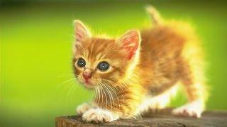 Видео смешных кошек и котят. Маленькие и пушысте ждут вас. Смотрите и улыбайтесь.