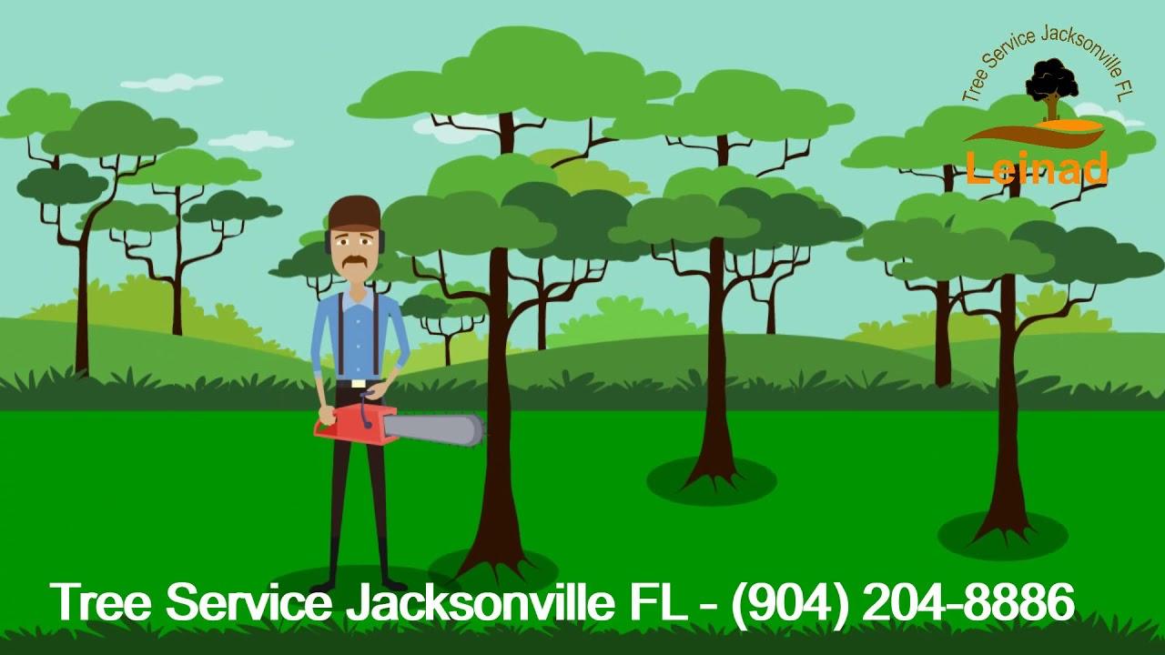 Tree Service Jacksonville Fl Tree Trimming Jacksonville Tree Removal Company Leinad Tree Service
