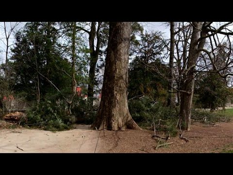 Nor'easter knocks down 227-year-old tree at George Washington's estate