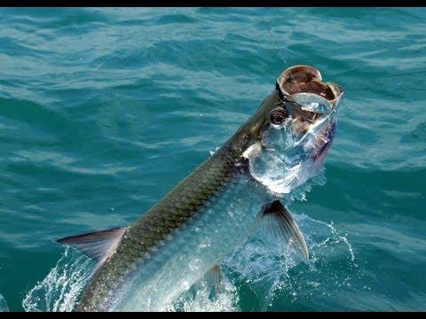 Best Tarpon And Rainbow Bass Fishing In Nicaragua