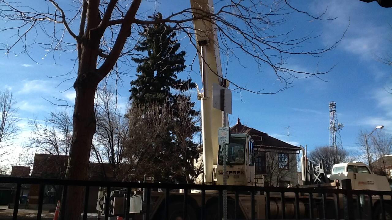 Cranes in Fort Collins Colorado - YouTube