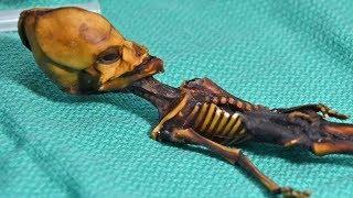 Bộ xương xác ướp ở sa mạc Atacama   Khoa Học Huyền Bí