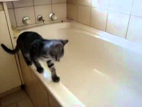 Cat Steps into Tub