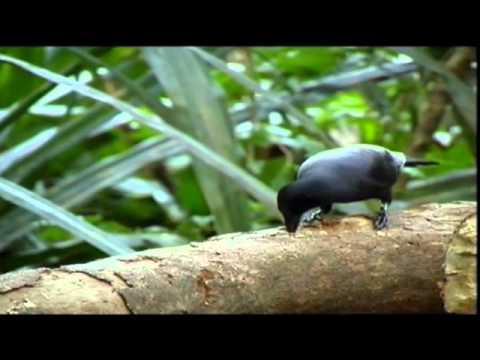Животные и орудия труда / Animals and tools