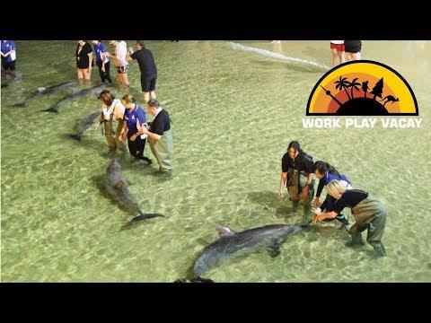 Wild Dolphin Feeding