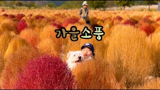 경남여행 이름도 생소한 댑싸리 군락지/부산근교 당일치기…